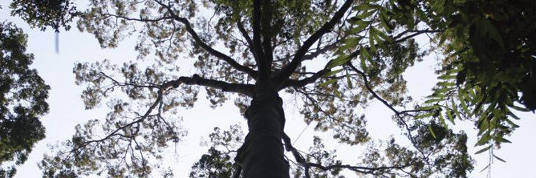Malaysia Taman Negara © Asian Overland Services