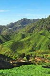 Reisebaustein Cameron Highlands © Malaysia Tourism Promotion Board